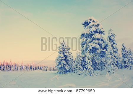 Snowy Field Pine Trees Under Blue Sky With Instagram Style Filter