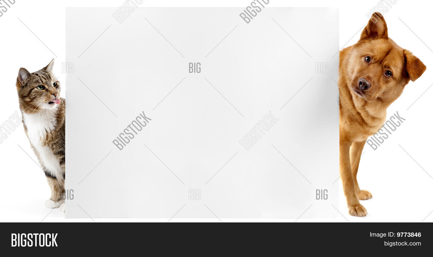Cat Dog Banner Image Photo Free Trial Bigstock