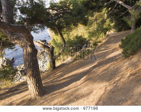 Old Park In Crimea