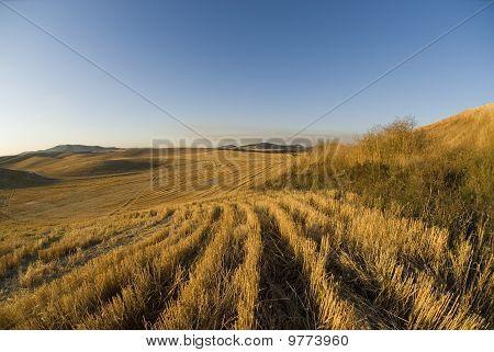 Idaho Fields