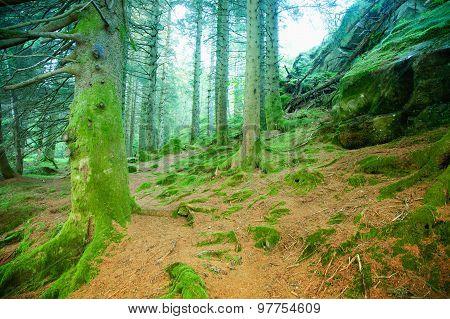 Mystical deep forest