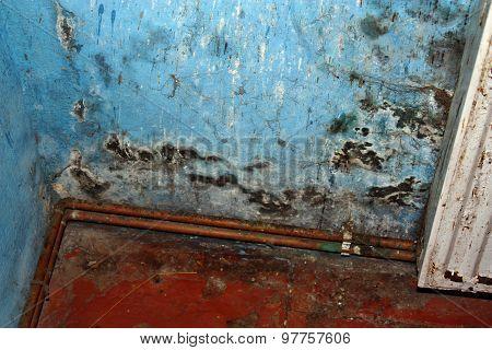 Dangerous Mold Fungus