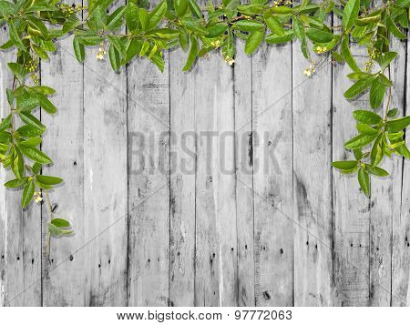 Vine Leaves With Small Flower Frame