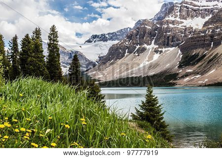 Yellow wild flowers growing by a lake and the glacier in the Bow Summit in Banff, The Canadian Rockies have numerous high peaks and ranges. The Canadian Rockies are composed of shale and limestone. One of the most beautiful landscape and scenery in north