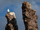 white dove sitting on an old tree in front of a blue sky poster