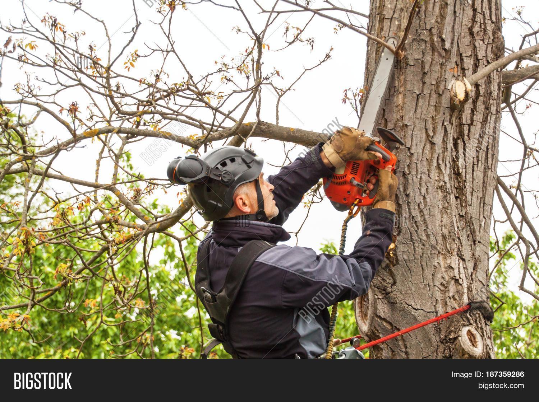 Arborist Using Image & Photo (Free Trial) | Bigstock