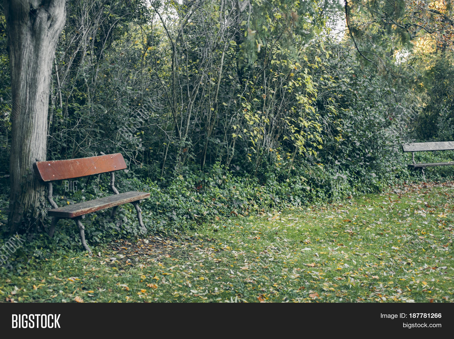 Old Wooden Bench Image Photo Free Trial Bigstock