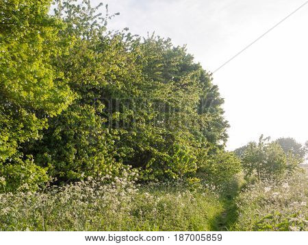 A Lush Natural Environment Outside In The Meadow And Peaceful And Happy In Nature With Green Spring