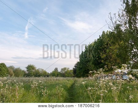A Nice Path Walkway Through A Countryside Meadow With Trees And Cow Parsley Peaceful And Lush