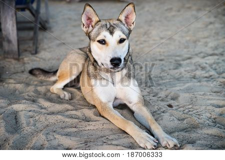 Sad abandoned dog lying on sand look at camera