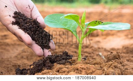 Close up Farmer hand giving plant organic humus fertilizer to plant