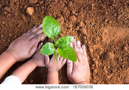 Kid hand and father planting young plant to ground top view