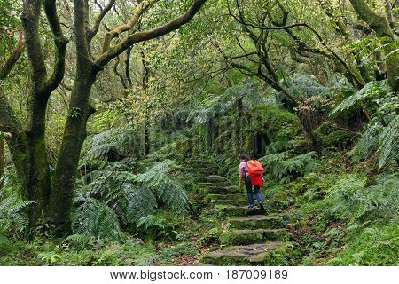 woman trekking in the subtropical forest of the Yangmingshan National Park, Taipei, Taiwan