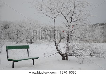 Bench in park and tree with red butterfly in winter.