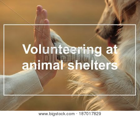 Concept of volunteering at animal shelters. Male hand and dog paw on blurred background