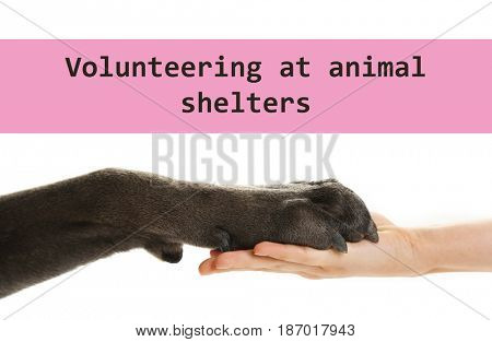 Concept of volunteering at animal shelters. Dog paw and female hand on white background