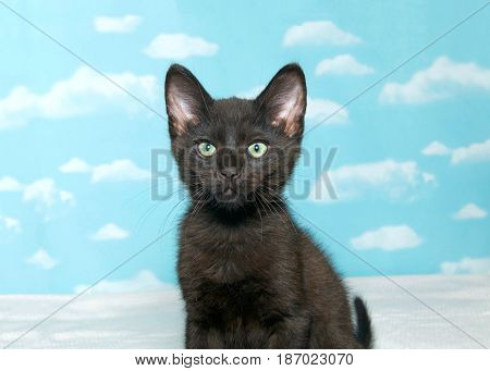Portrait of one black kitten looking at viewer. Blue background sky with clouds