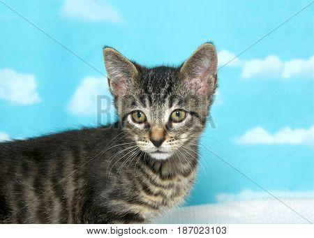 Portrait of one small tabby kitten looking slightly to viewers left. Body on left side of the frame. Blue background sky with clouds.