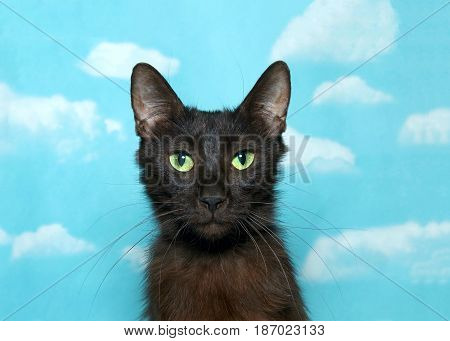 Portrait of one black and brown cat with vibrant green eyes looking at viewer. Blue background sky with clouds.