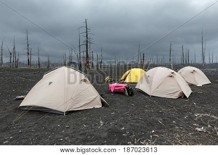 Tourist tents standing in Dead Wood on volcanic slag and ash eruptions Tolbachik Volcano - consequence of catastrophic eruption of volcano during on Kamchatka Peninsula in 1975-1976.