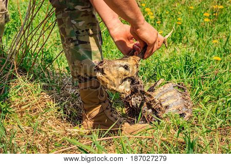 A man tries to unscrew the head of a dead roe to pick up the horns