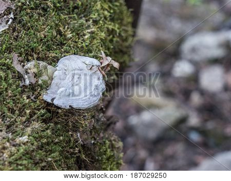 Parasite fungus growing on a tree trunk