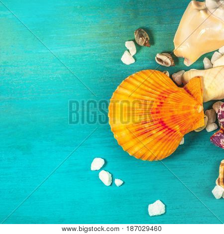 An overhead photo of sea shells and pebbles on a vibrant turquoise background, with a place for text. A square design template for a summer vacation banner