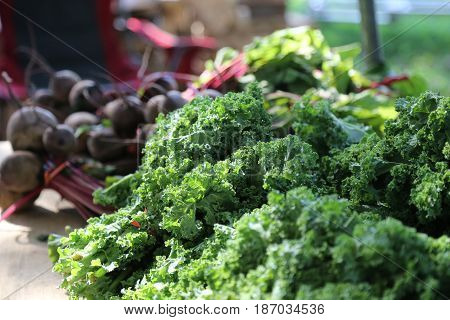 Kale is a very trendy green that is available at most farmers markets & here it is positioned next to the red beets for good contrast.