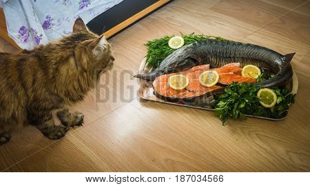 Image of a cat and a sturgeon decorated with lemon and dill and parsley