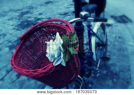 Romantic beautiful white rose and a wicker red basket on the bike