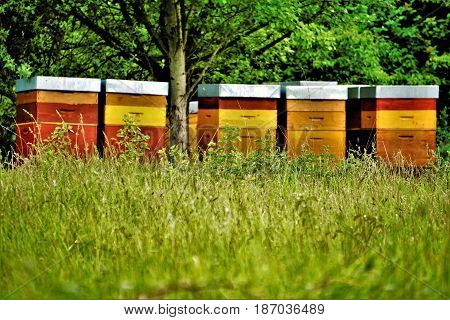 Photo of colourful beehives standing under a tree