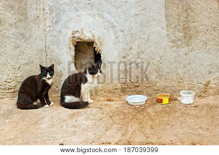 Two Stray Cats Sitting In Bowls