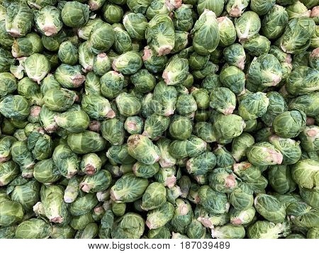 Several fresh picked Brussels Sprouts make a raw vegetable background