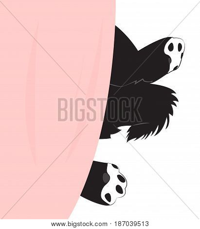 Puppy paw under the blanket. Vector illustration