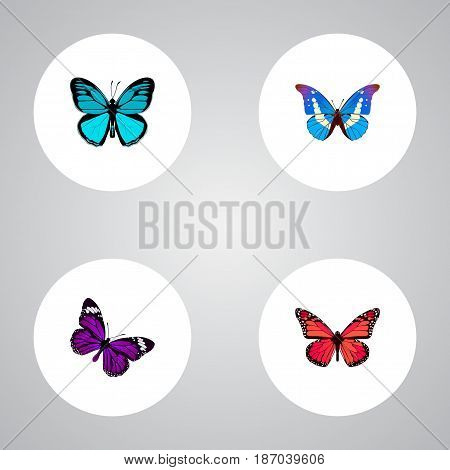 Realistic Azure Peacock, Butterfly, Bluewing And Other Vector Elements. Set Of Beauty Realistic Symbols Also Includes Morpho, Butterfly, Bluewing Objects.