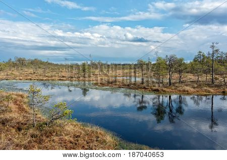 Sunny day in swamp with blue sky