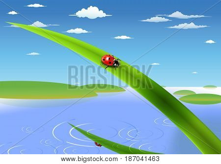 ladybug on grass over zelenitsy spring lake which is a mirror image of the sun the whole composition on the background of green hills and blue sky with clouds