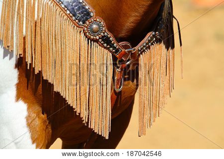 Fringe on paint horse breast collar and tack