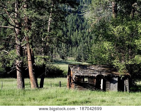 An abandoned wooden homestead at the base of a hill in a juniper pine forest in Crook County in Central Oregon on a sunny summer day.