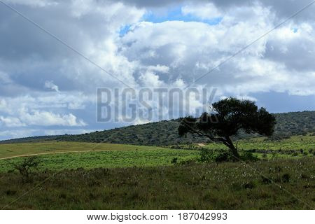 Green Grass In The Addo Elephant National Park