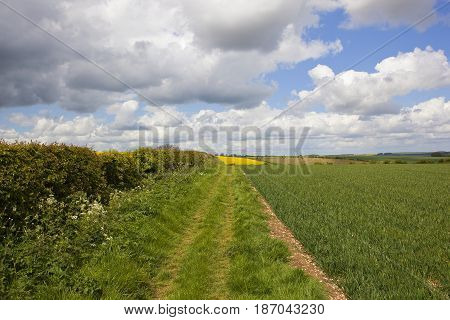 Scenic Bridleway With Hedgerow