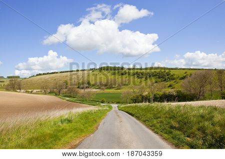 Country Road And Meadows