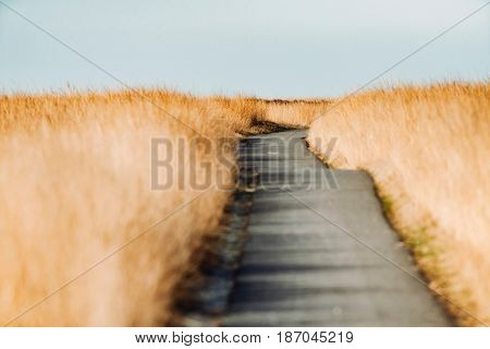 A bumpy road in tall yellow grass.