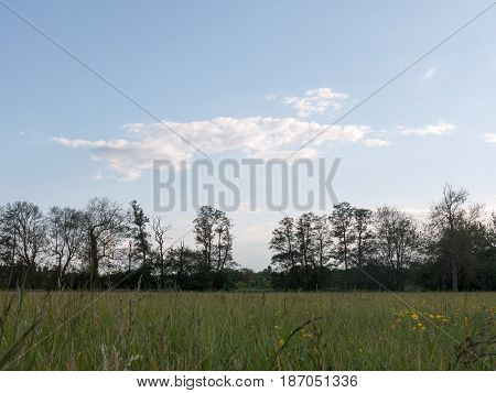 A Beautiful Treeline In The Distance With A Gap Seen From The Point Of View Of The Grass Level With