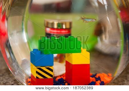One small striped fresh water aquarium fish swimming in a bowl with selection colorful child's building blocks
