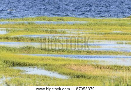 High tide creates rows of marsh grass on Buzzards Bay