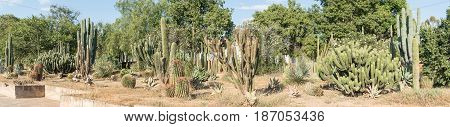 A cactus display at the entrance to Graaff Reinet a town in the Eastern Cape Province of South Africa