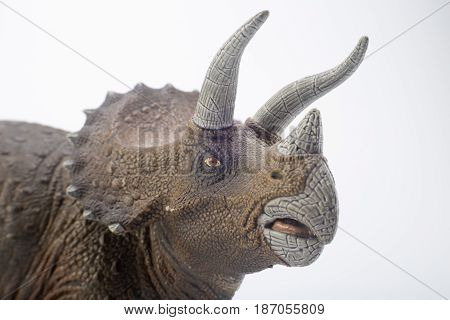 Macro Head Shot Of A Triceratops Dinosaurs Toy Isolated On White Background