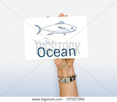 Ocean Fish Marine Animal