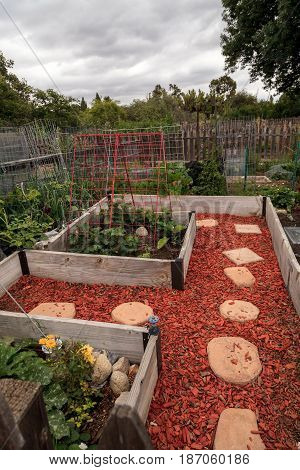 Community Organic Garden With Natural Vegetables